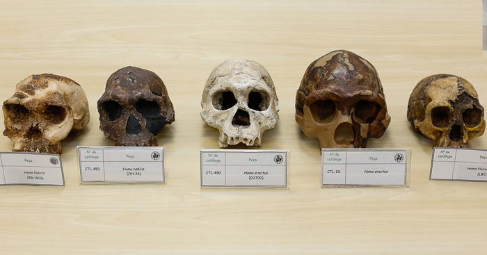 Crânios de hominídeos - Jorusp