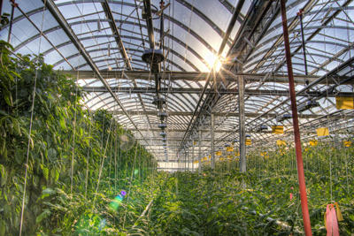 Montreal rooftop greenhouse - 2
