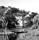 Amazonas - rev
