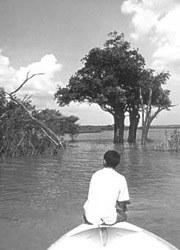 Amazônia - capa