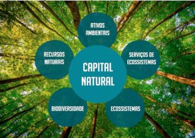 Componentes do Capital Natural