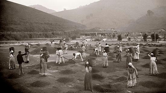 Escravos em fazenda de café no Vale do Paraíba