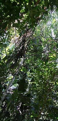 florestaamazonia2.jpg