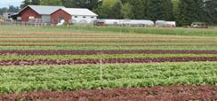 Home 2 - Agricultura sustentável