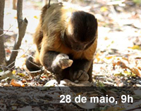 Home 3 - Arqueologia primata