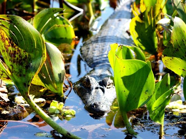 Pantanal Mato-grossense2