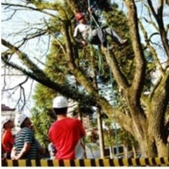Verdejando poda de árvore